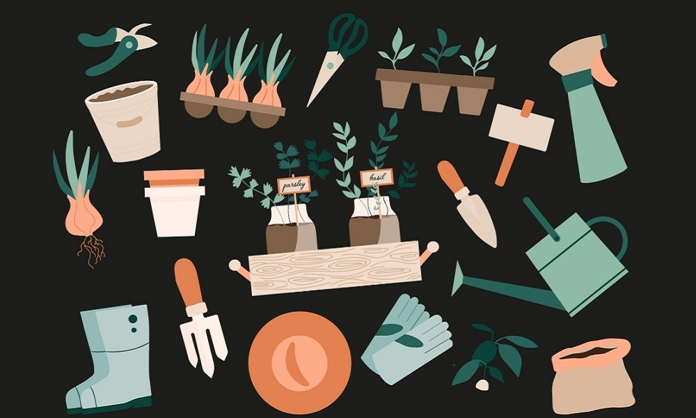 Planting my organic vegetable garden