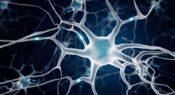 Brainy teaching: Educational neuroscience and classroom practice
