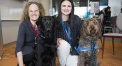 Podcast: Therapy dogs in school settings