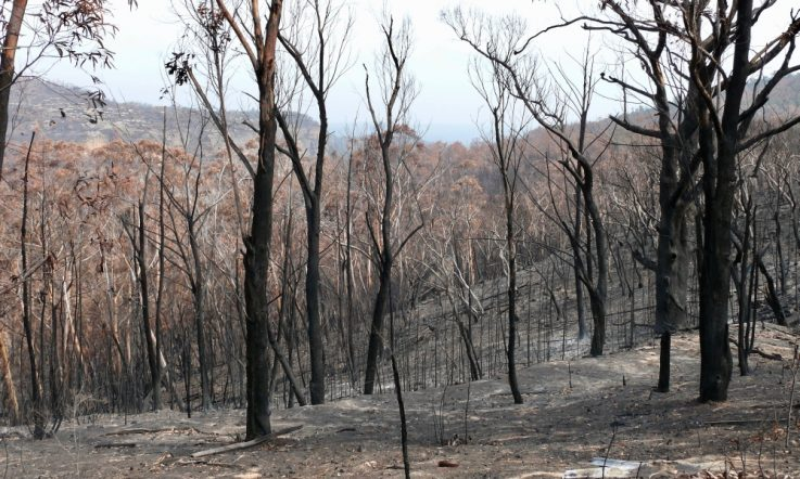 Bushfires: Supporting school communities