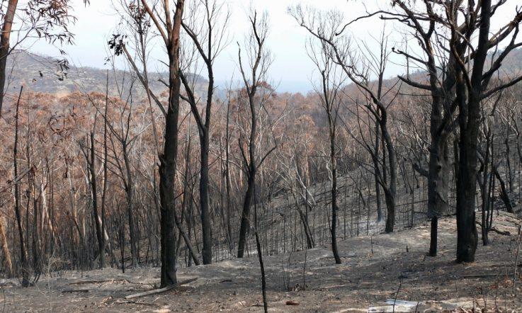 Bushfires: Supporting school communities