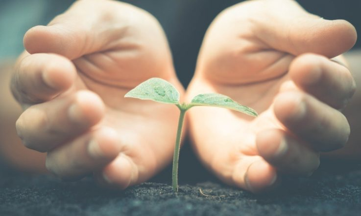 School improvement: Sowing the seeds of success