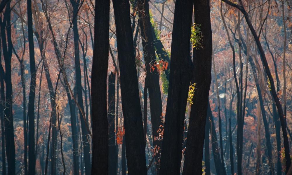 Bushfire recovery in schools