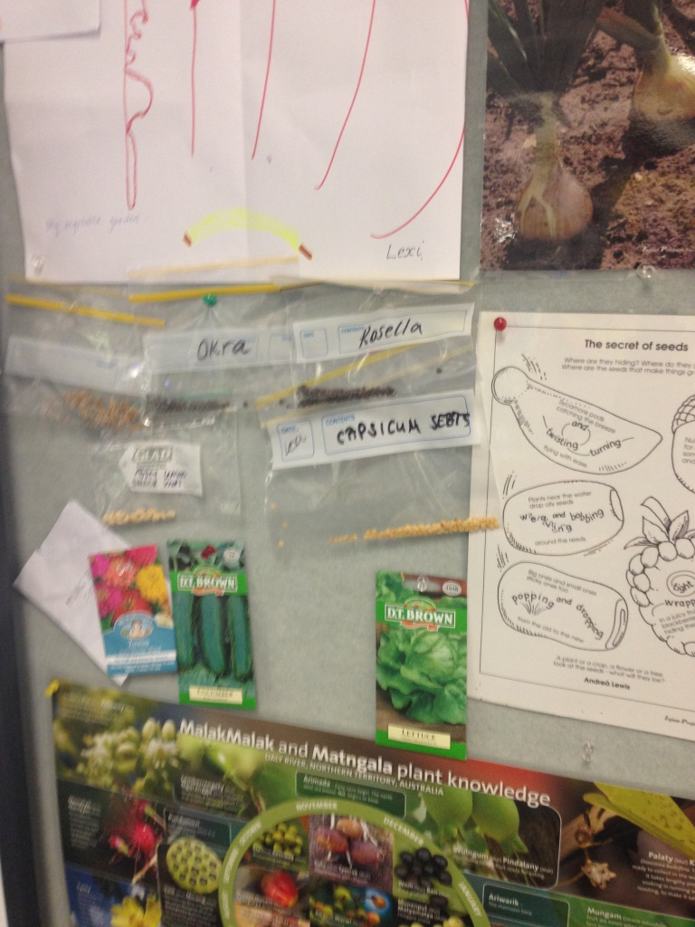 Nakara Preschool's seed wall displays seeds the students and their families have brought in from home.